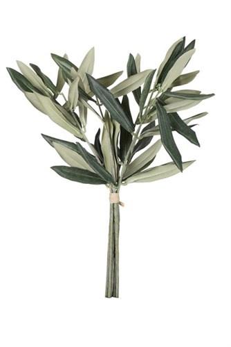 Lene Bjerre Branches ol olive trees