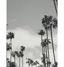 Joy Berdina Poster Palmtree