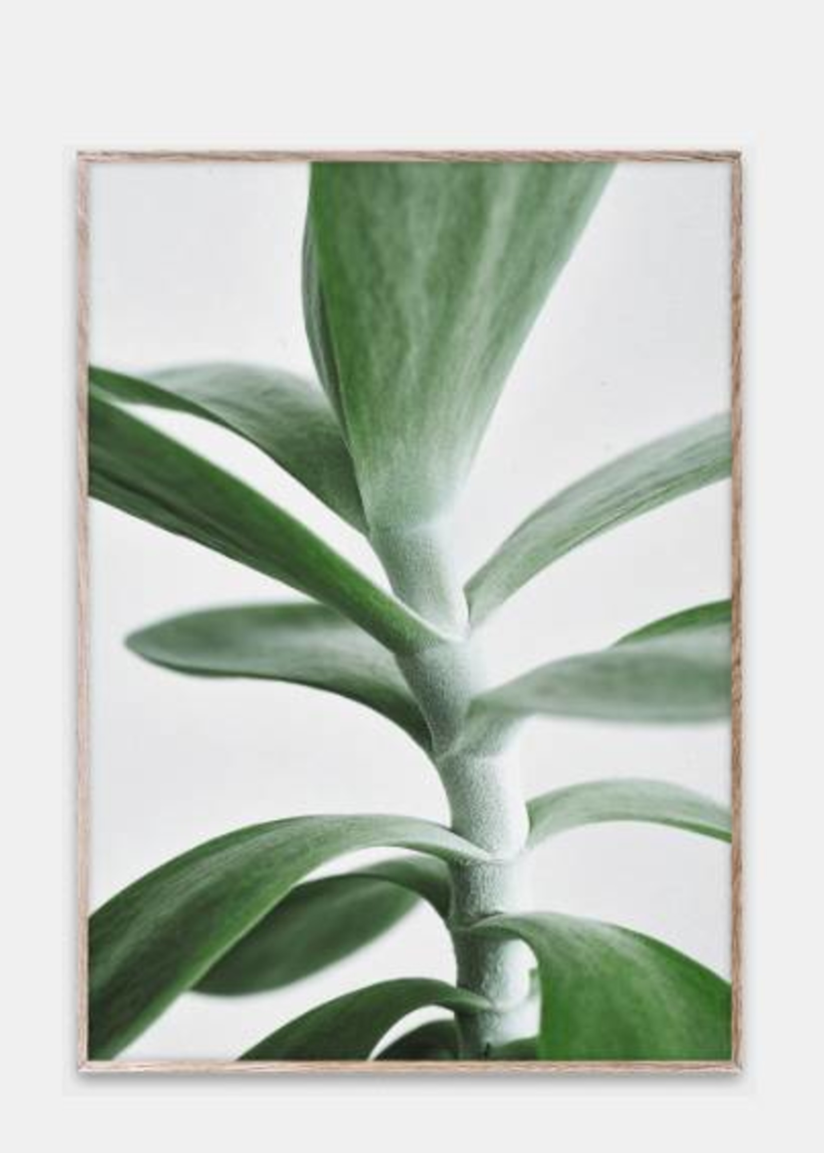 Paper Collective Print Green Home 04 30x40
