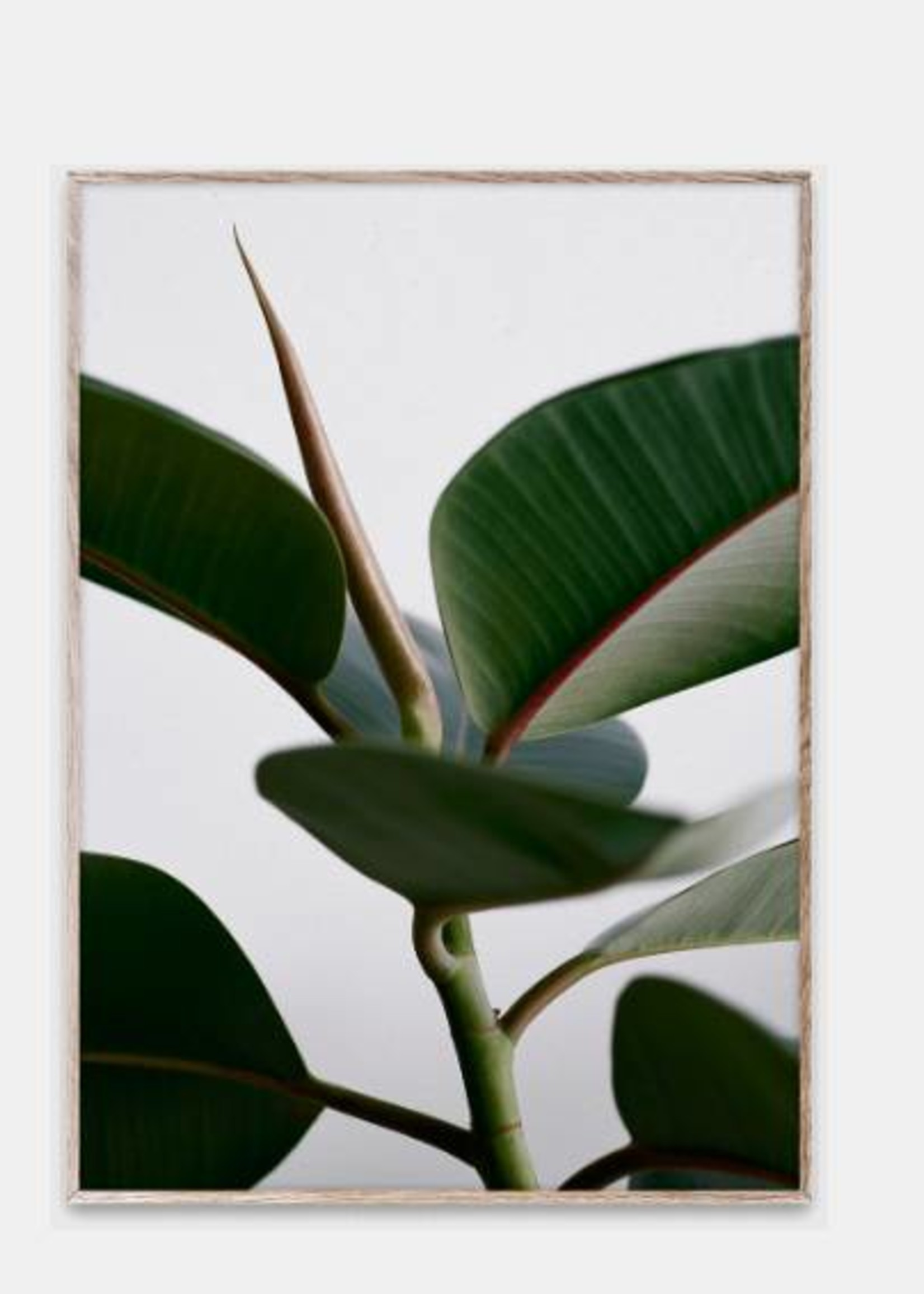 Paper Collective Print Green Home 02 30x40
