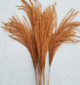Dry flower Dried stipa feather