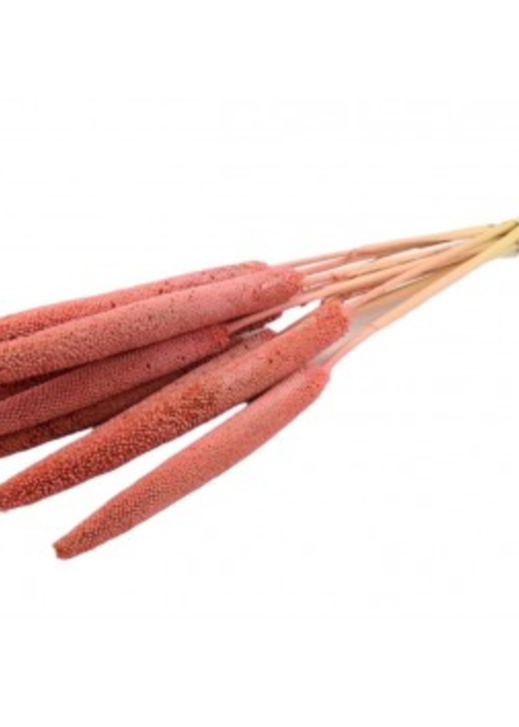 Dry flower babala pink p/s