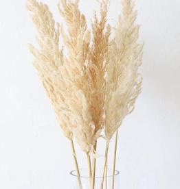 Dry Flower erianthus - long 110 cm