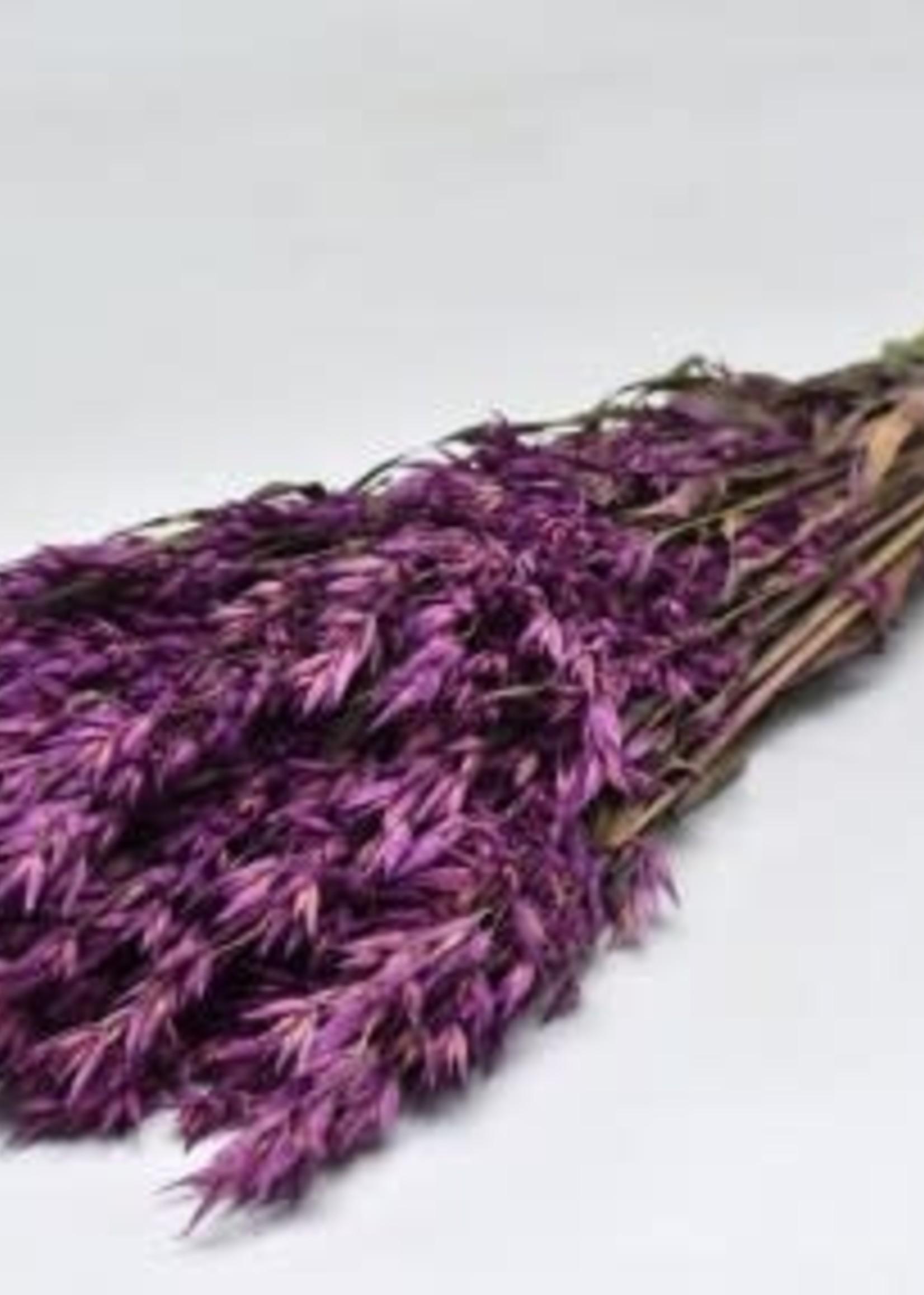 Dry Flower haver purple