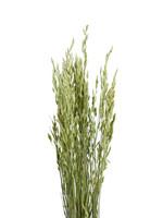 Dry Flower haver naturel