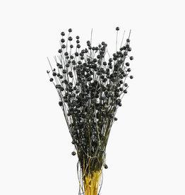 Dry flower vlas black