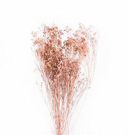 Dry flower Sheaf stargrass naturel