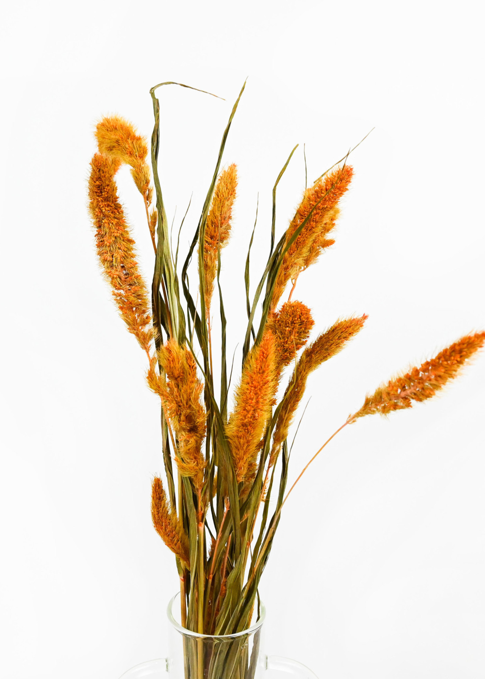 Dry flower setaria