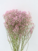 Dry Flower Gypsophilla 60cm pink 5