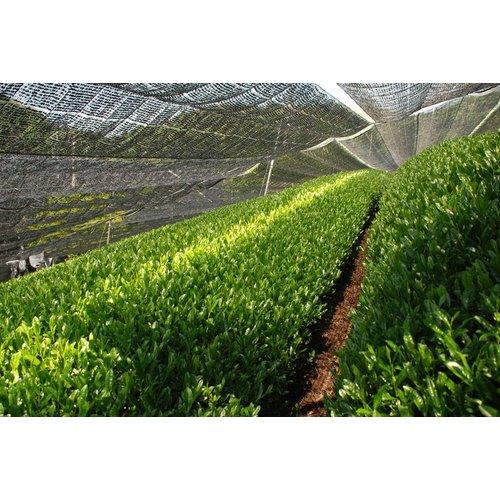 Kukicha Kaede biologisch   losse thee kopen