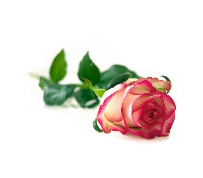 Scheercrème 75ml Rose