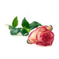 Scheercrème 150g Rose