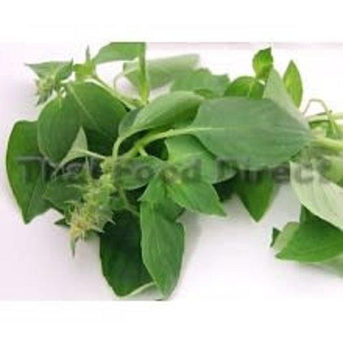 Hairy Basil ( Bai Mang Luk ) 100g