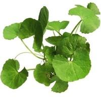Pennyworth Leaf (Bai Bua Bok) 100g