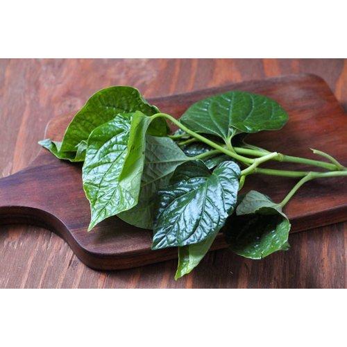 Wild Betel Leaf (Cha Plu) 100g