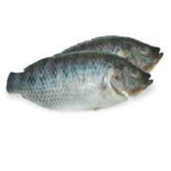 Black Tilapia 400-600g