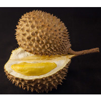 Durian Approx 1.6kg