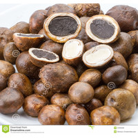 Barometer Earthstar Mushrooms