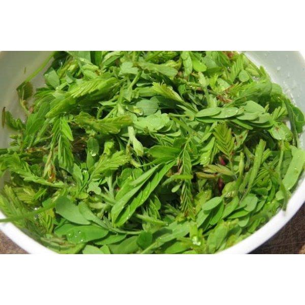 Young Tamarind Leaf 100g