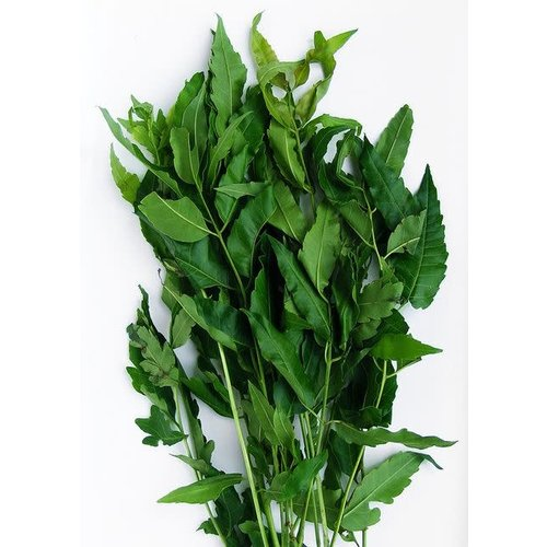 Margosa Leaves (Sa Dao) 100g