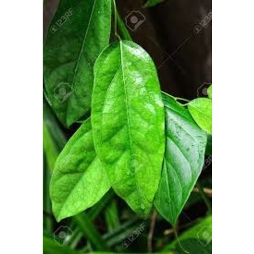 Bai Yanang Leaf /ใบยานาง 100g