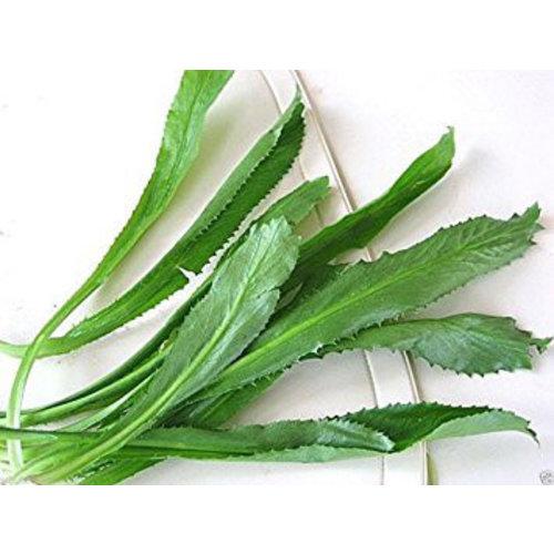 Stinking (Thai parsley) 100g