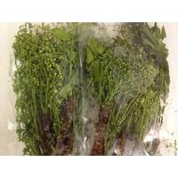 margosa / Sadao Flower 100g