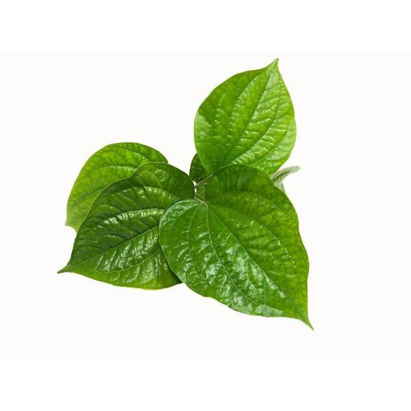 Betel Leaf (Cha Plu) 100g