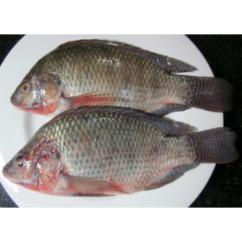 Black Tilapia (Cleaned & Gutted) 400g - 600g  (Frozen)