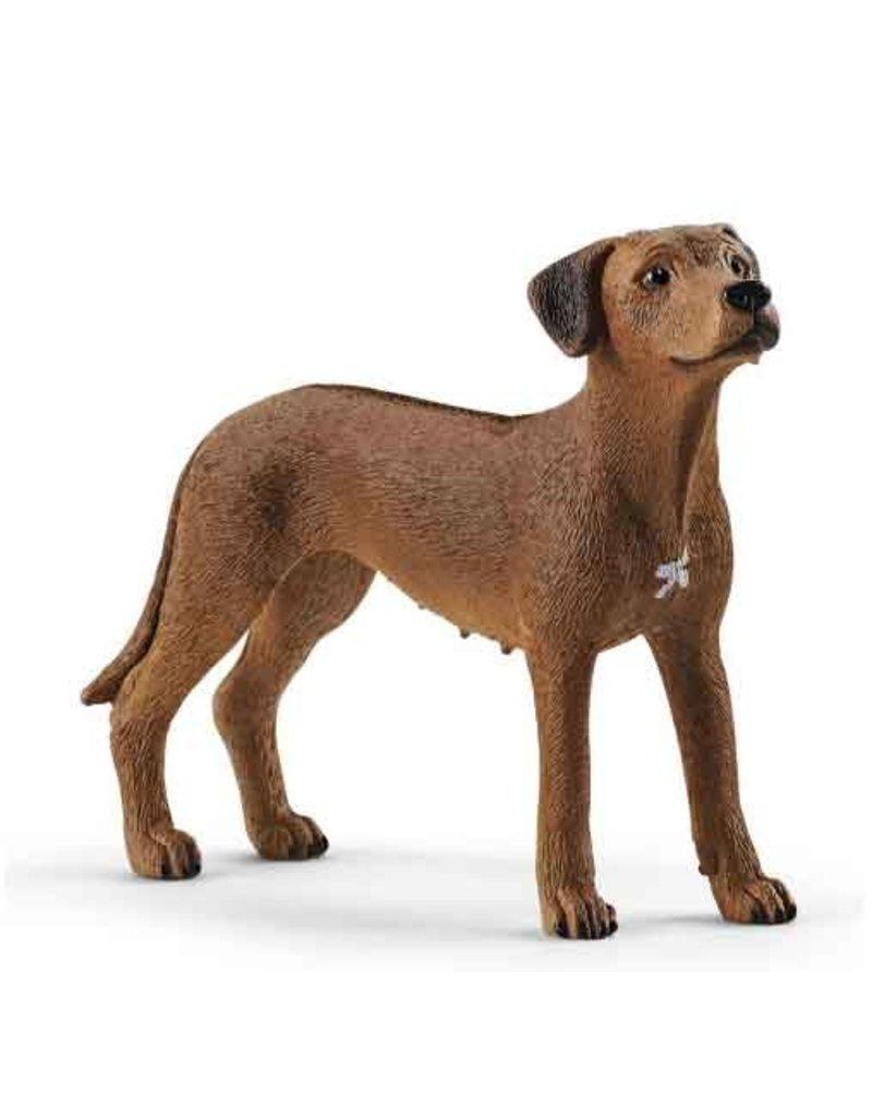Schleich Schleich Dog 13895 - Rhodesian Ridgeback