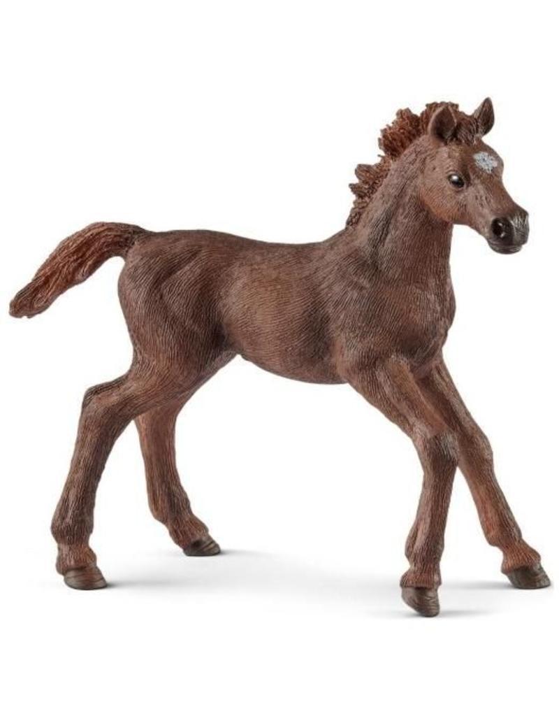 Schleich Schleich Horses 13857 - Engelse Volbloed veulen