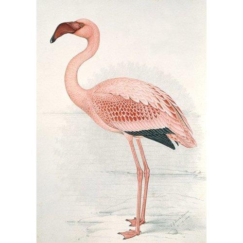 IXXI IXXI Wanddecoratie - Flamingo Claude Finch-Davies