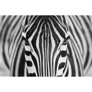 IXXI IXXI Wanddecoratie - Zebra