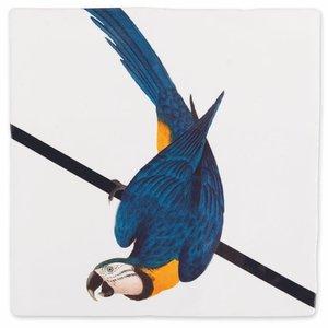 StoryTiles tegel Blauwe papegaai small 10x10cm