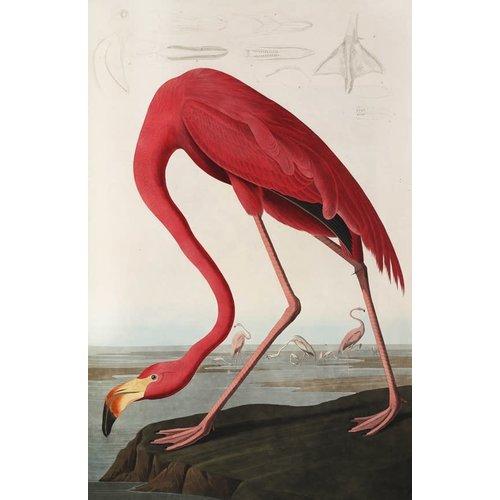 IXXI IXXI wanddecoratie - Flamingo/Audubon