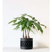 Aztek bloempot zwart Ø5,5cm