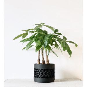 Minimum Design Aztek bloempot zwart Ø5,5cm
