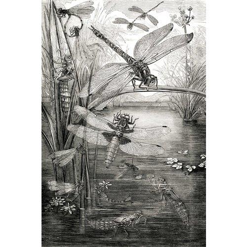 IXXI IXXI wanddecoratie - Dragonflies