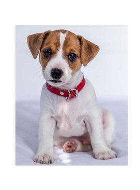 Animal Pictures Fleece deken Jack Russell Terrier 120 x 150 cm