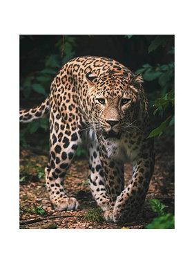 Animal Pictures Fleece deken Luipaard 120 x 150 cm