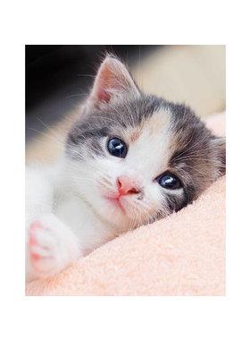 Animal Pictures Fleece deken Kitten 120 x 150 cm