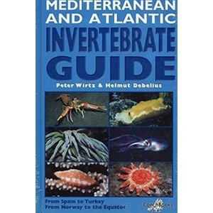 Mediterranean and Atlantic invertebrate guide