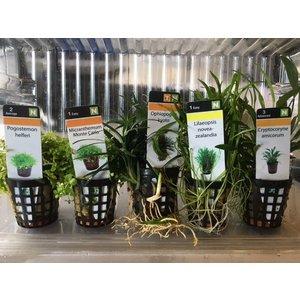 Waterplant Plantybox voorgrond 5 potjes