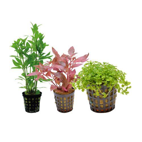 Aquarium planten