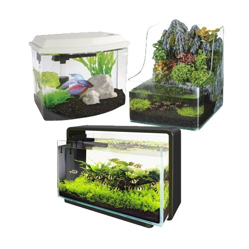 Superfish aquarium
