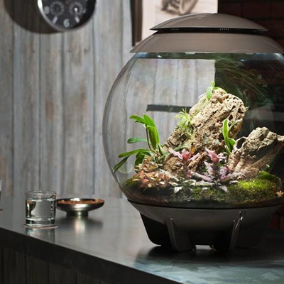 Biorb Air terrarium