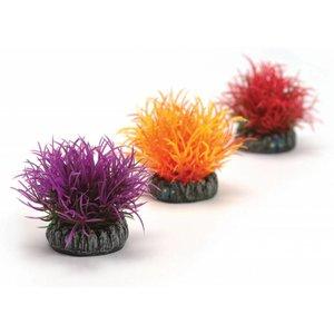 biOrb Kleurballen small 3x oranje/rood/paars