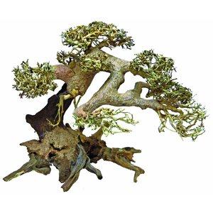 Superfish BONSAI DRIFTWOOD LARGE