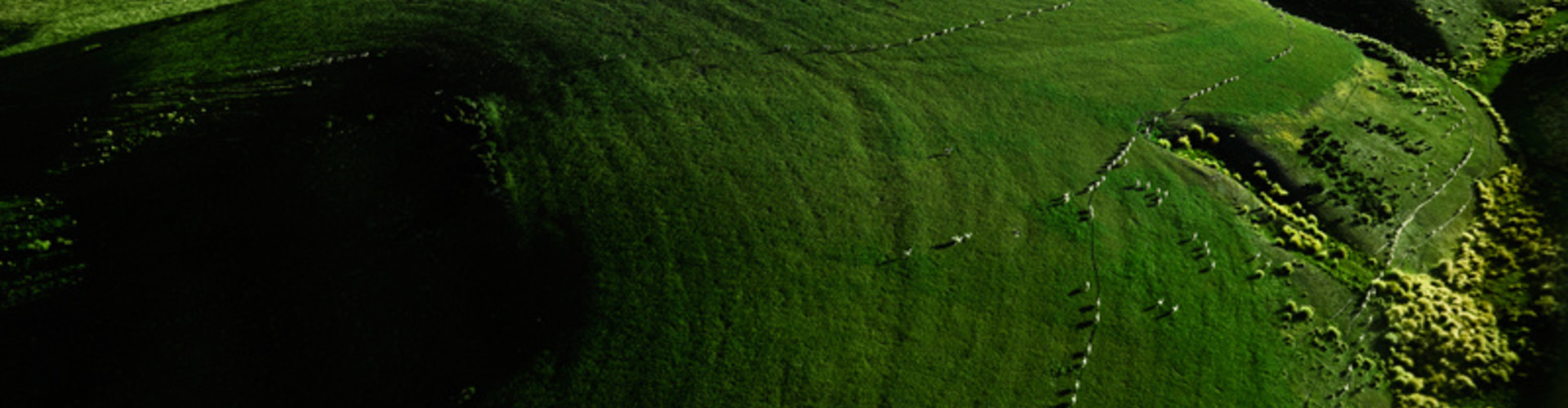 Meer over lamsvlees uit Nieuw-Zeeland