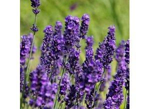 Geurolie Lavender Fields 20 ml - Zelf geurkaarsen - waxmelts maken
